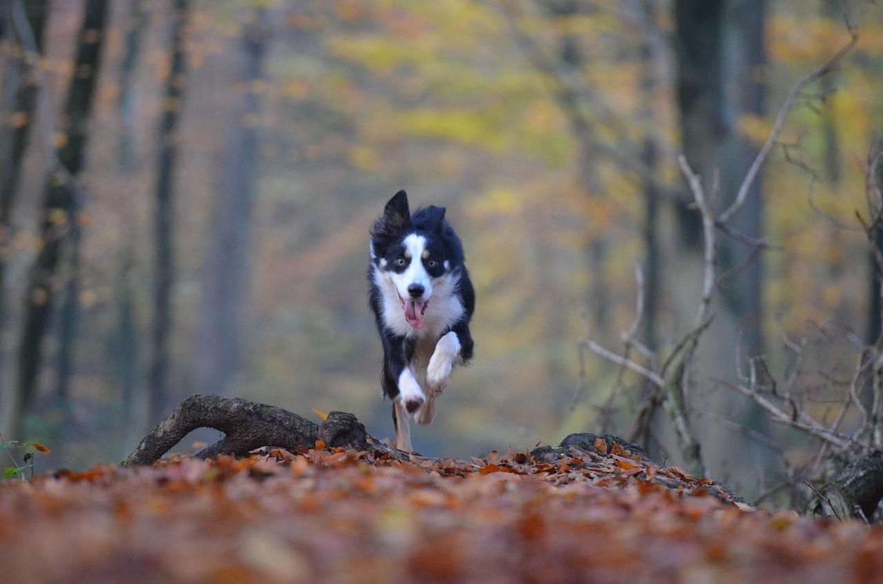 uciekający pies